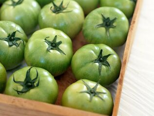 unripe tomatoes for varicose veins